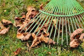 Välkommen till höstens städdag!
